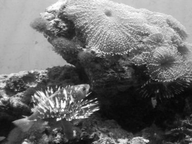 Aquarium Life - Galveston Moody Gardens