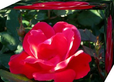 beautiful flower3d