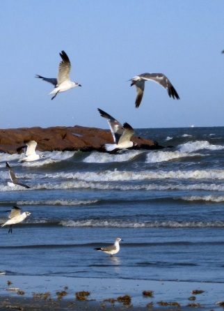 seagulls on the go