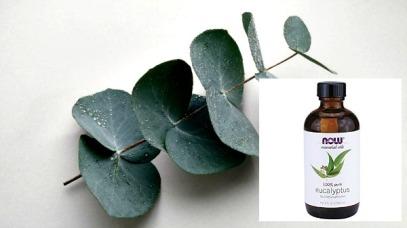 eucalyptus oil pic