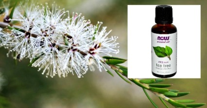 Tea Tree Oil.2
