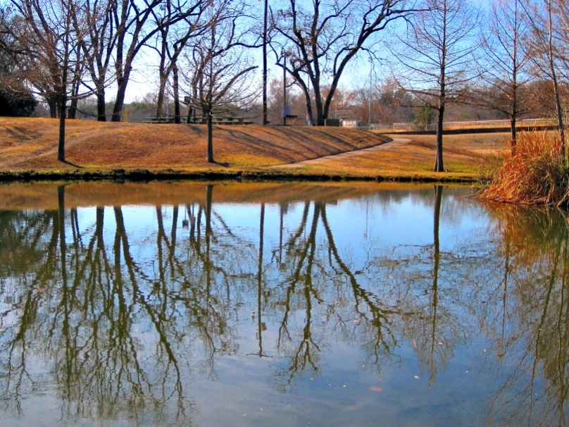 tree-reflection-in-water