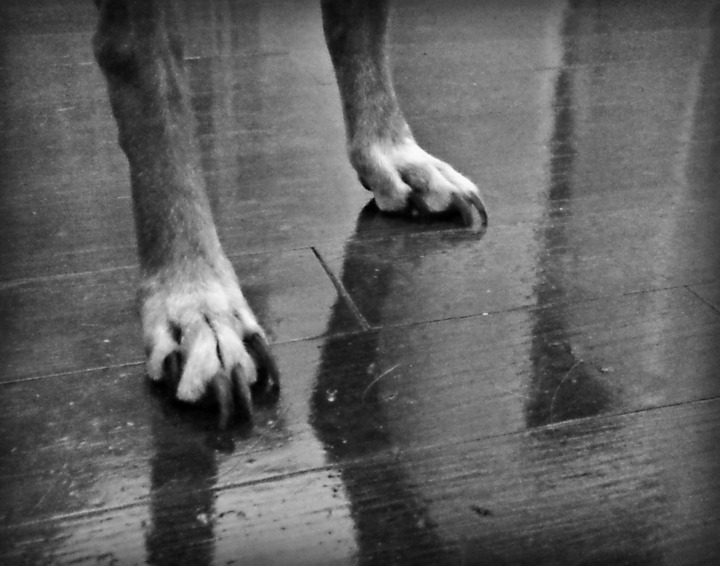 Mellow's paws