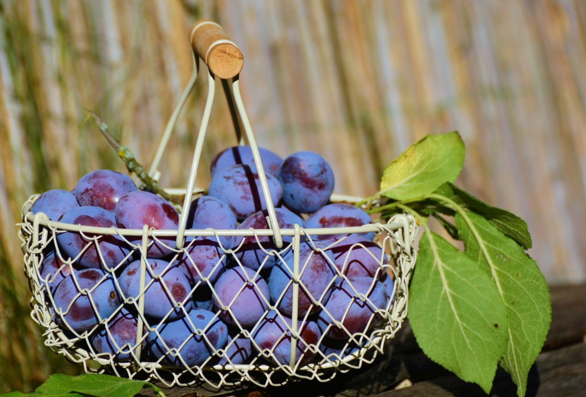 berries-blueberries-blur-209592