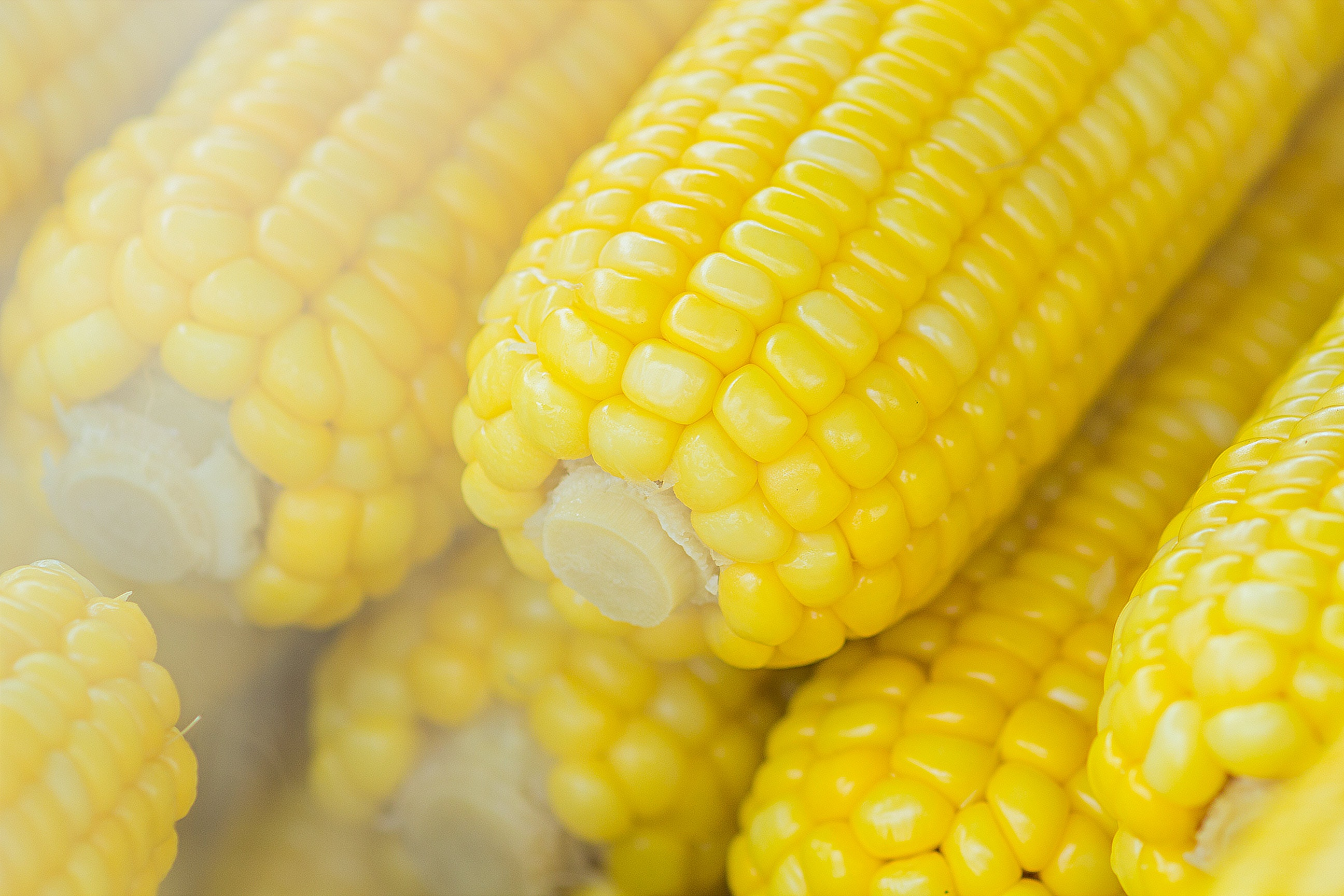 blur-close-up-corn-603030